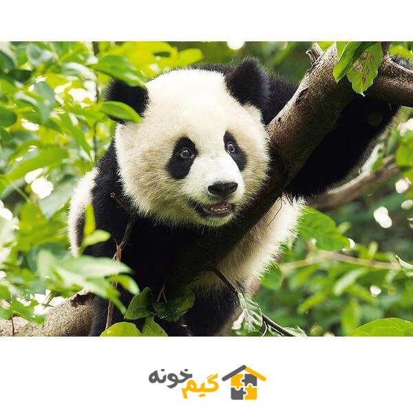 پازل giant-panda